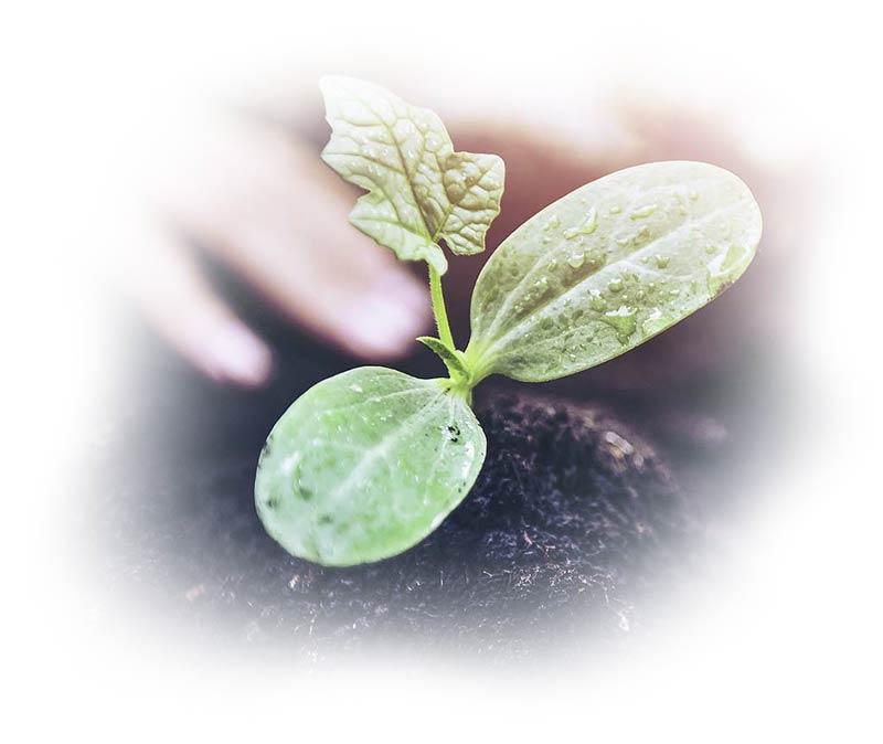 Velatia: Sostenibles por naturaleza