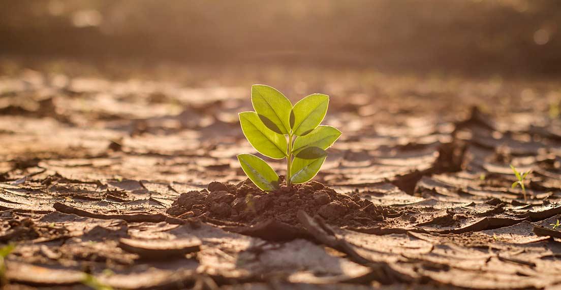 Velatia: sostenibilidad, medio ambiente